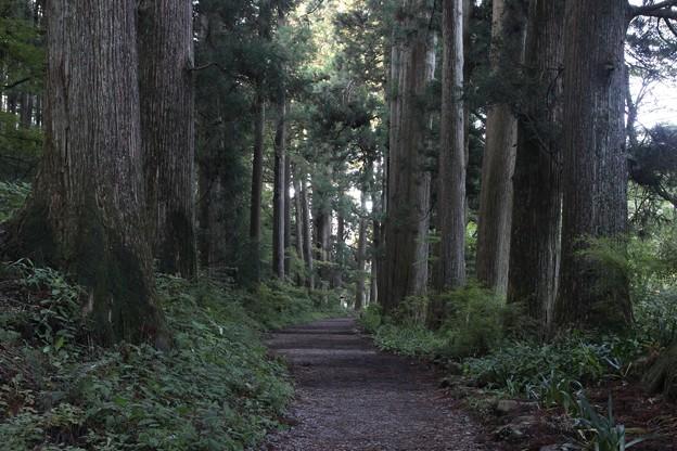 昼なお暗き杉並木3