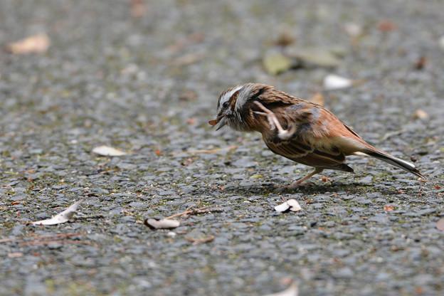 愛すべき身近な野鳥達4