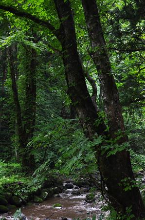 1408玉簾の滝そばの木立ち