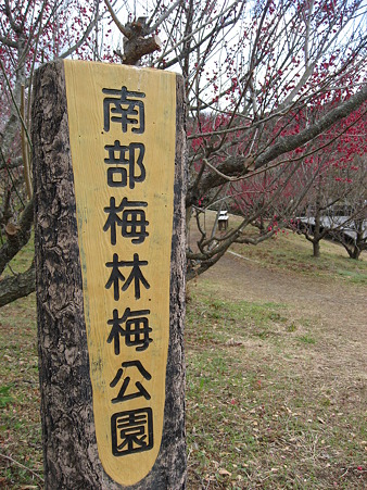 [旅行] 和歌山・みなべ町 「南部梅林」 (2011 2/18)
