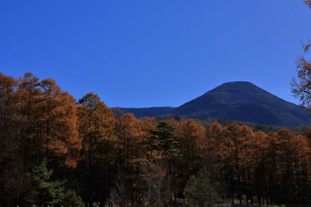 カラマツ林と蓼科山