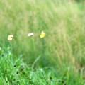 Photos: 花みたい