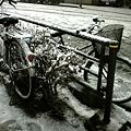 写真: 雪@東京