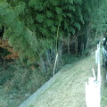 Photos: 我が家の竹藪