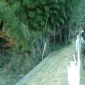 写真: 我が家の竹藪