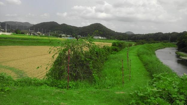 長閑な田舎の風景 (5)
