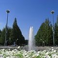 噴水広場♪