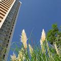 Photos: 高層マンションのそばに。。