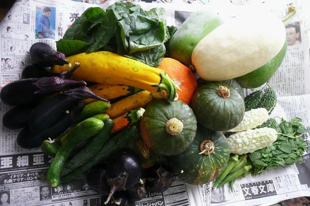 momokaさんのお野菜♪