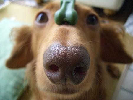 鼻デカもどき