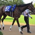 Photos: ラキシス 雄大な馬体