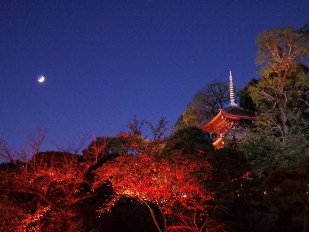 椿山荘の庭園