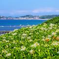 写真: 真夏の丘の上