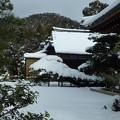 写真: 金閣寺 陸舟の雪松 Snow covered Rikushu Pine, Kinkakuji*陸舟の松重たげに京の雪