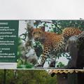 豹の警告 Warning from Sri Lankan Leopard