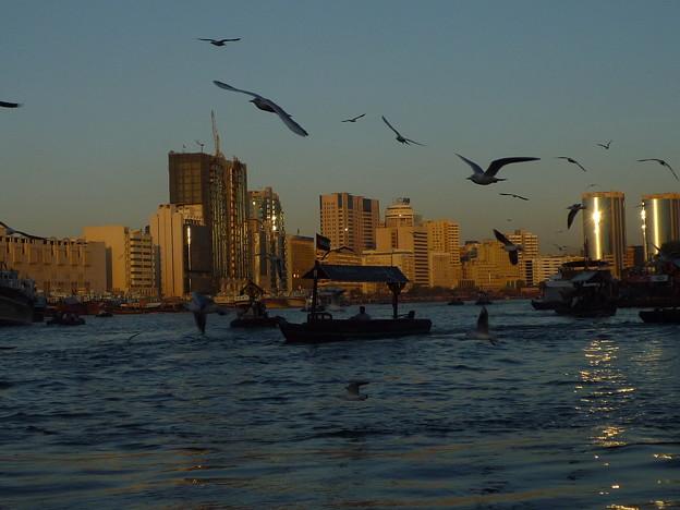 アブラ船から見たディラ地区 Deira from Abra on Dubai Creek *冬カモメ かすめて飛ぶや アブラ船