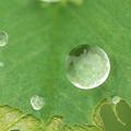 写真: 雨のタマゴ