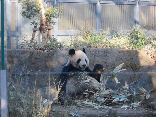 写真: パンダ