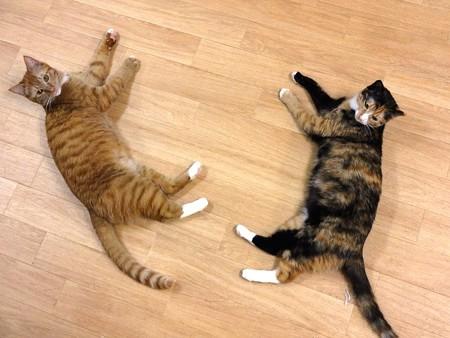 フミヤ&メイ「くつろぐときは一緒♪」