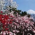 4月6日富士宮からの富士山 今日はイイ感じで富士山が見えています(^ ^)