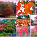 Photos: 2015/11/08・・・雨の日曜日