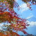 2015/11/16・・・お山と紅葉?03
