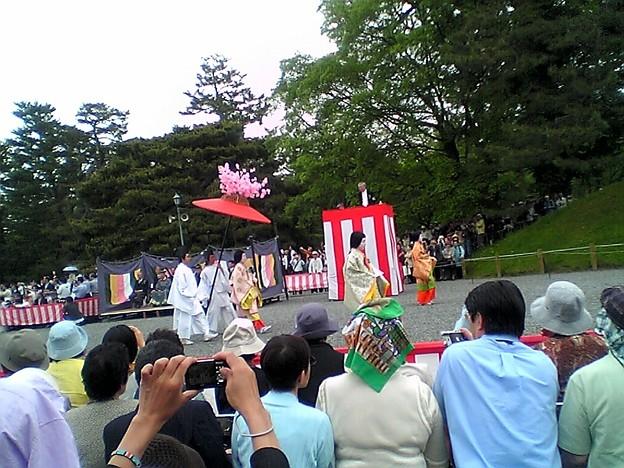 Photos: 葵祭