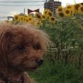 Photos: 2014-07-19 17.38.46