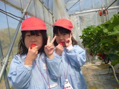 大きなイチゴを、口一杯にほおばる園児