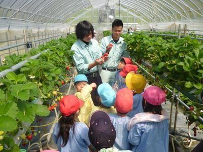 野菜コースの学生が収穫指導