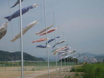 有田市鯉のぼり1