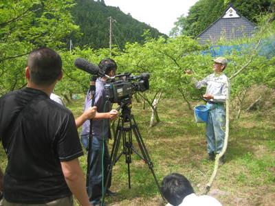 ぶどう山椒の収穫