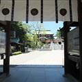 写真: 椿神社03 境内