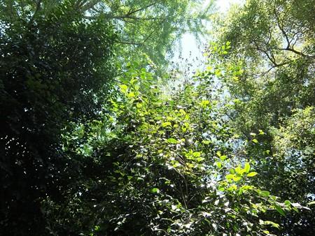 椿神社13 海藻の森で遊ぶ魚群のよう