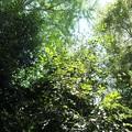 Photos: 椿神社13 海藻の森で遊ぶ魚群のよう
