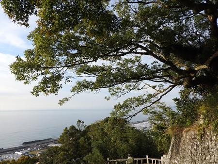 久能山東照宮21 崖に張り出す枝