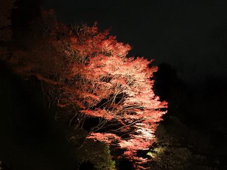 知恩院(ライトアップ)08