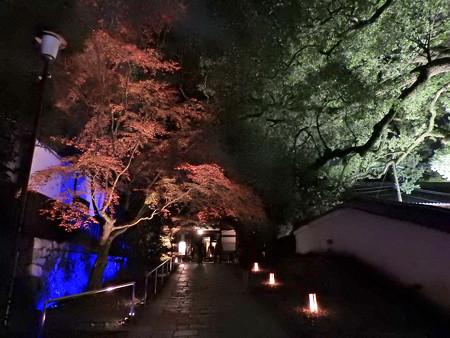 青蓮院門跡(ライトアップ)05