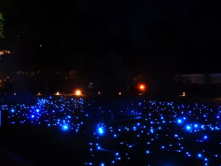 青蓮院門跡(ライトアップ)14 地上の星たち