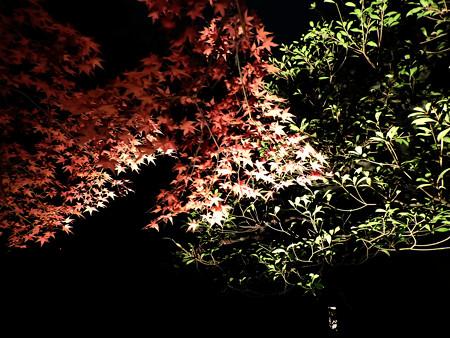 青蓮院門跡(ライトアップ)23