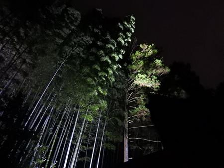 青蓮院門跡(ライトアップ)39