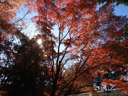 東福寺52
