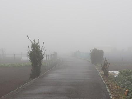 霧の朝02