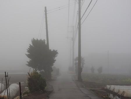 霧の朝03
