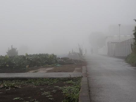 霧の朝04