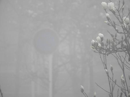 霧の朝05