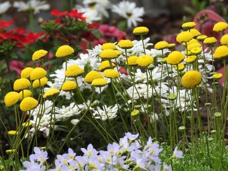 庭 花ほたる