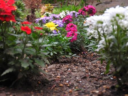 庭 花の小路3