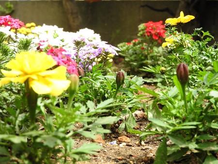 庭 花の小路5