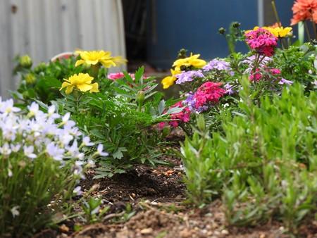 庭 花の小路7